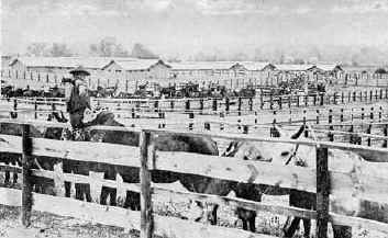 The Remount Station at Camp Meade: Containing 22,000 horses and mules!
